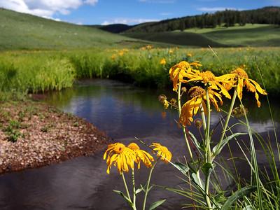 Sneezeeweed on the Black River