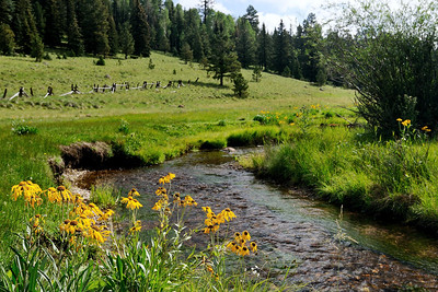 Little Colorado River Meadow