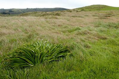 Grasses at the trailhead