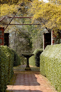 Hedges of holly