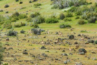 Small herd