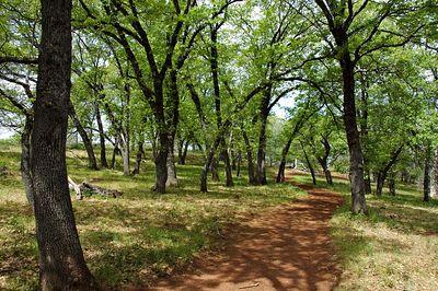 Black Oak Grove
