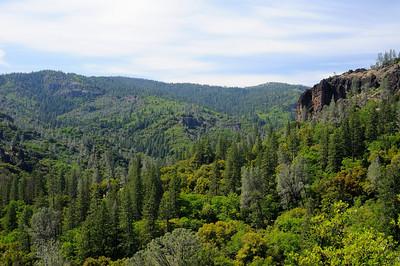 Forest above Deer Creek