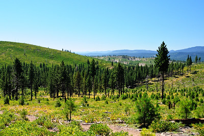 Bear Valley and the peaks near Truckee