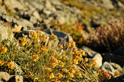 Flowers on the rocky slopes