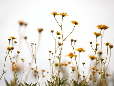 Flower Shoots