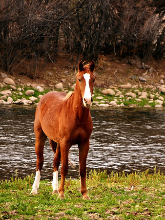 Coon Bluff Horses