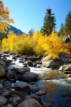 Blazing yellow shoreline