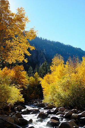 Aspens along the Carson River