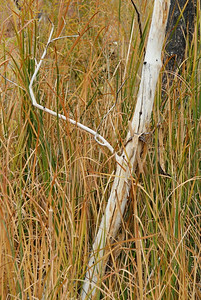 Tree in the cattails