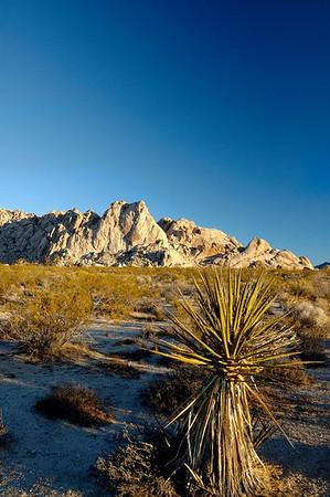 Yucca and Granite