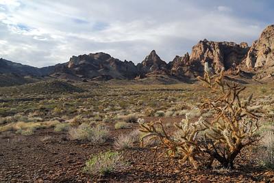 Cactus and Cliffs