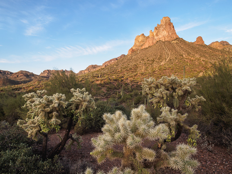 Byous Butte and Cholla