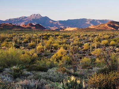 Desert and Four Peaks