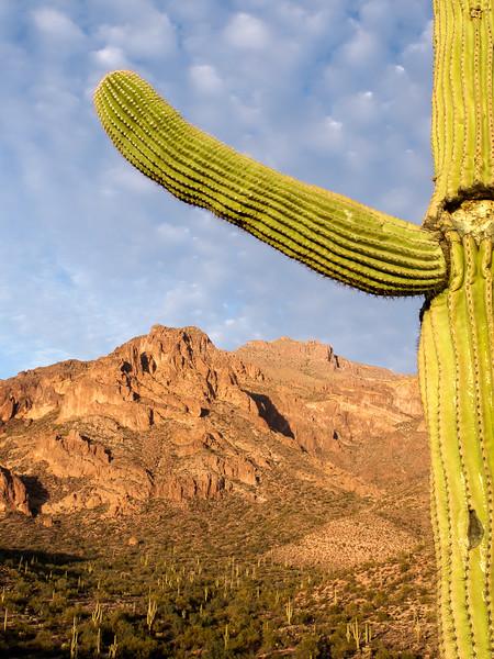 Cactus Frame