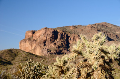 Cholla and cliffs
