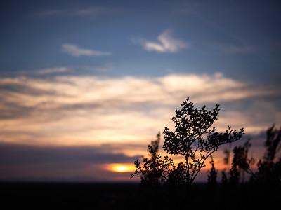 Creosote Evening