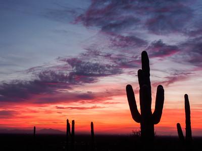 Saguaro Sundown