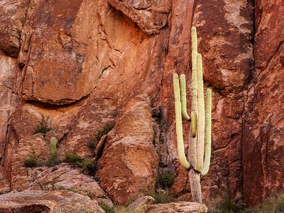 Cliffside Saguaro