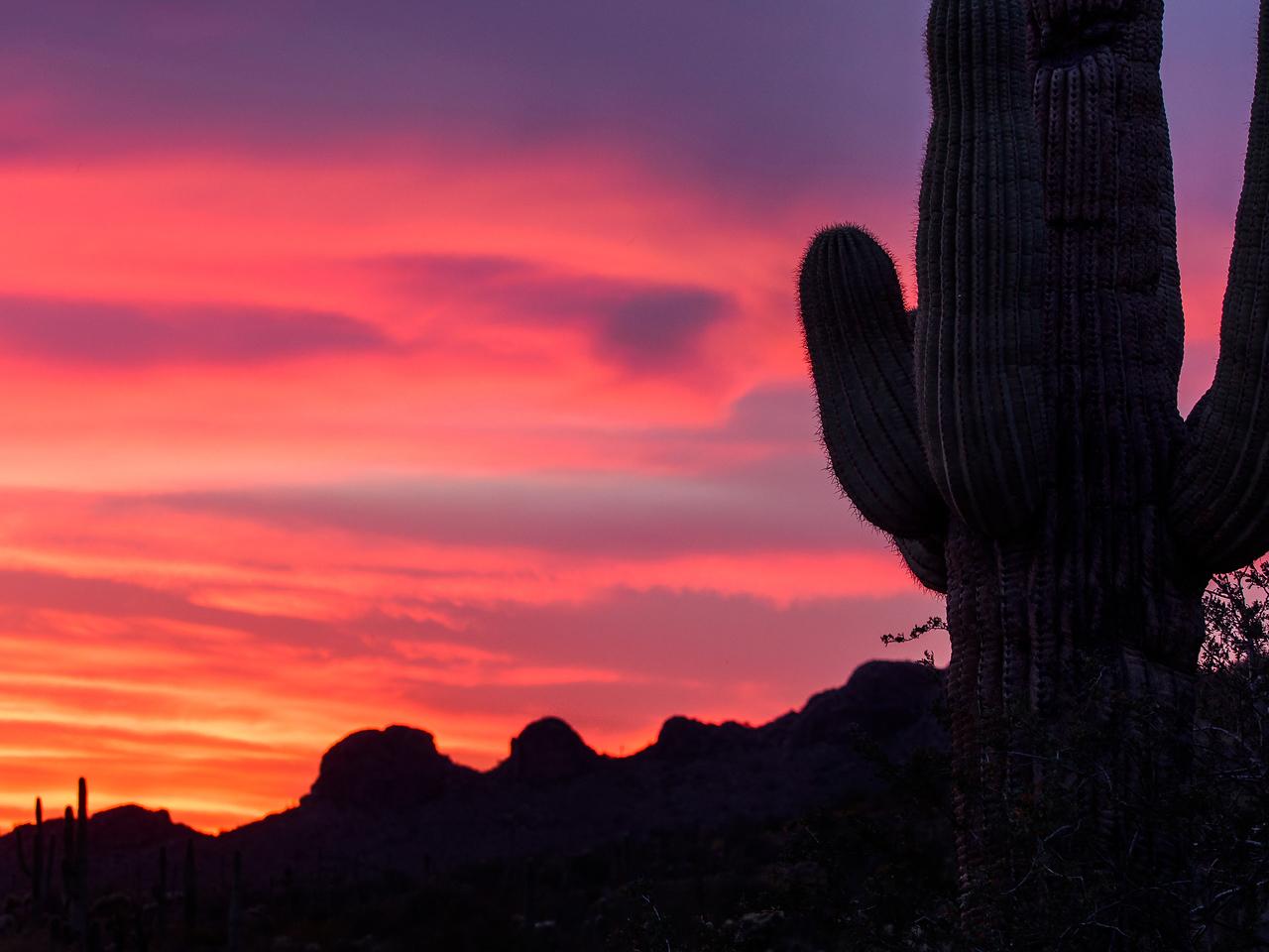 Saguaro & Fire Sky