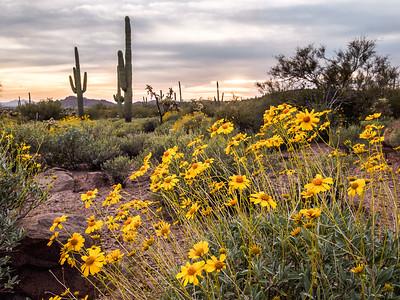 Nature's Desert Garden