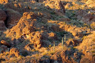 Saguaro covered hillside