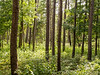 Big Thicket Forest