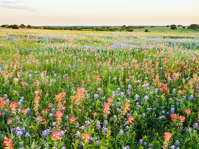Brenham Wildflower Hunting