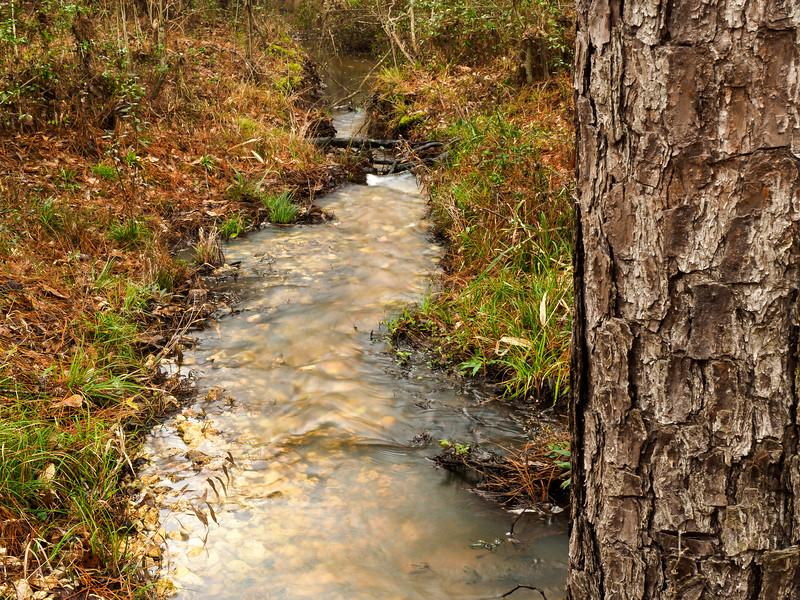 Little Chinquapin Creek