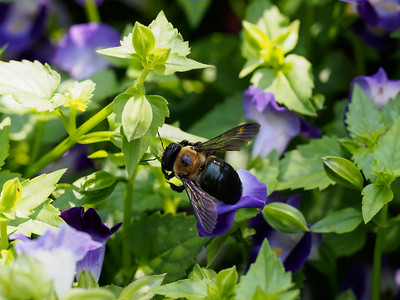 Bee-like creature