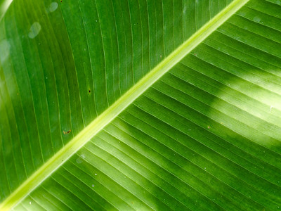 Frond Up Close