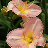 'Antique Peach Ruffles'
