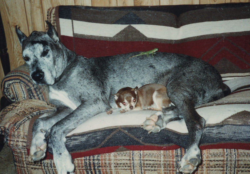 My childhood pets, Lurch, Chichi and Lizzie. I don't know the year.