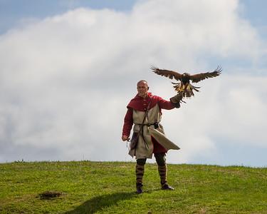 Falconer flying a Harris Hawk (Raphael historic falconry)