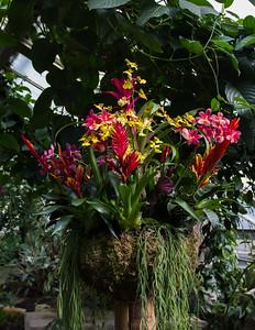 Tropical Extravaganza