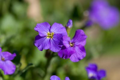 Taken in my back Garden