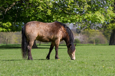 Horse in the fields leading to the House