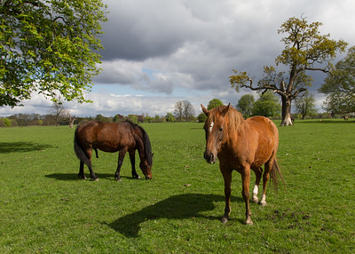 Horses in the fields leading to the House