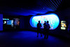 Blue scenography for the jellyfishes