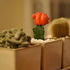 Cacti<br /> <br /> Kaktuszok