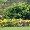 Rhododendron garden <br /> <br /> Rhododendron kert