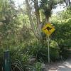 Healesville Sanctuary<br /> Healesville állatkert