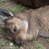 Ballarat Wildlife park<br /> <br /> Ballarati vadaspark
