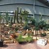 Cacti garden in a garden shop<br /> <br /> Kaktuszkert az egyik kertészetben