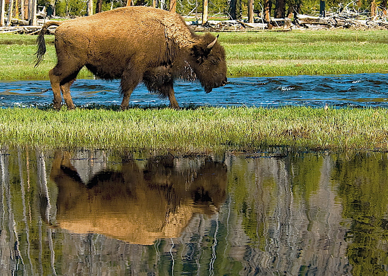 """ Bison Reflection ""   ____ 3536Kh<br /> <br /> The lighting was just right for a unique reflection image of this beautiful stroll down a thin peninsula of land in Springtime...   <br /> <br /> This unique image is fused directly onto a specially treated, rigid piece of Aluminum.<br /> More archival and lighter than a framed paper print, it arrives ready to hang.<br /> The Float-Mounted MetalPrint™ needs no frame and<br /> will appear to float 3/4"" from your wall.<br /> <br /> Archival paper prints are also available<br /> ------- Contact us for more information -------<br /> moreinfo@RobertHowellPhotography.com"