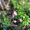 04-01-16 Dayton 01 magnolia