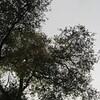 08-24-16 Dayton 03 trees