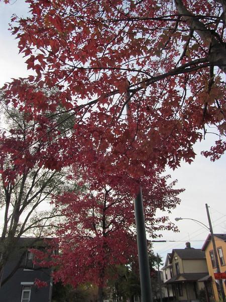 11-01-16 Dayton 10 leaves