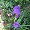 05-01-16 Dayton 03 iris