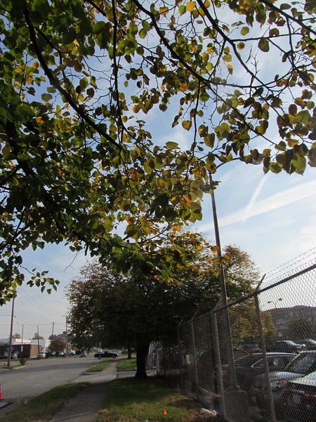 11-01-16 Dayton 02 leaves